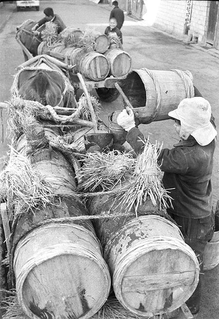인분 수거용 우마차 (전북일보, 1952)
